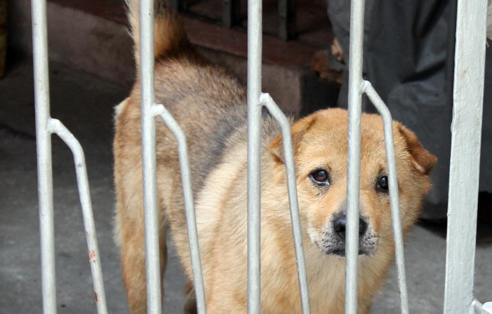 Dog near Julong Village