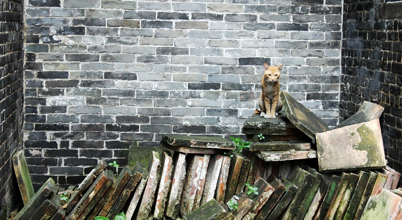Cat in the Julong Village